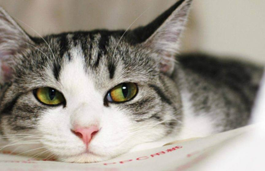 7 любопытных фактов о взаимоотношениях человека и кошки