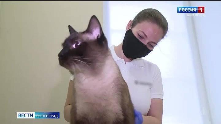 Болезни кошек: перечень заболеваний, причины, симптомы
