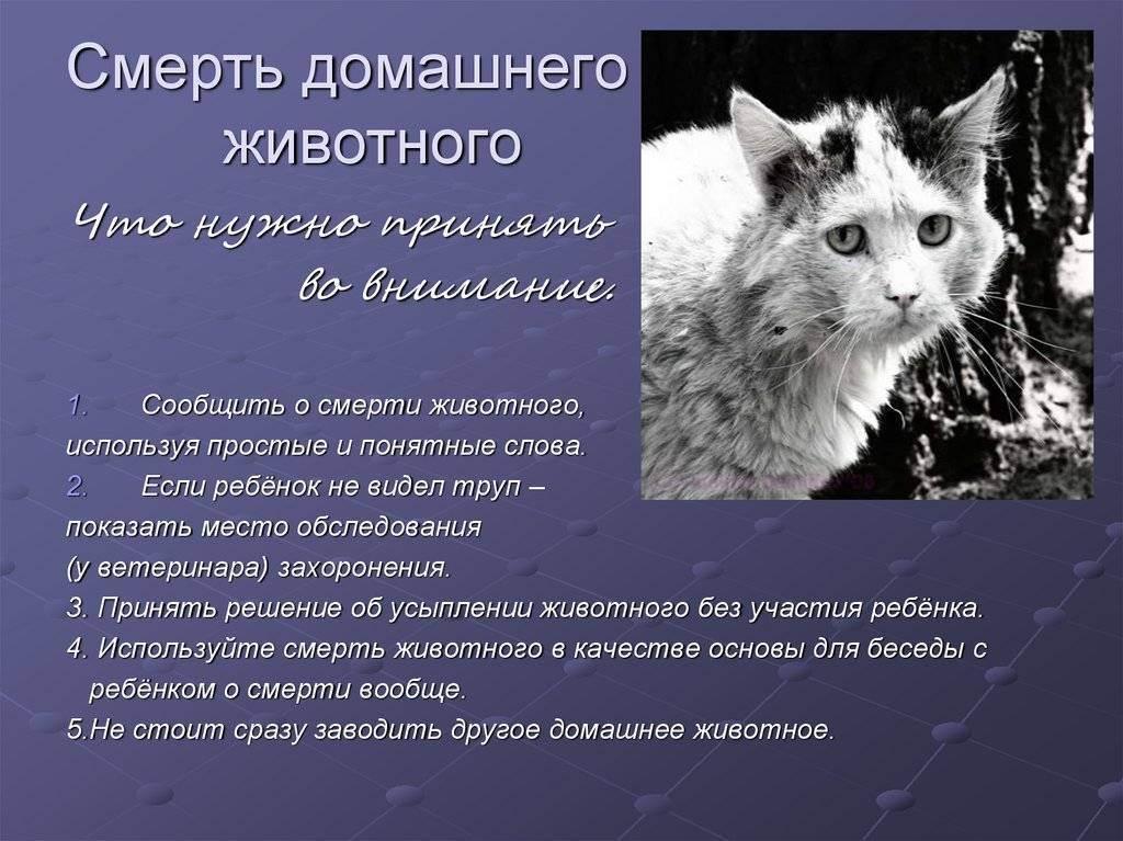 Как пережить потерю любимой кошки. как пережить смерть домашнего животного? советы психолога