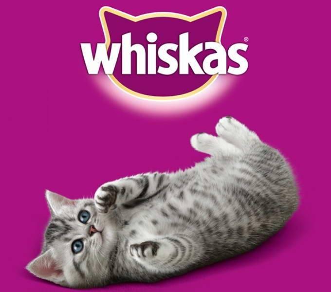 Можно ли кормить кошку вискасом?