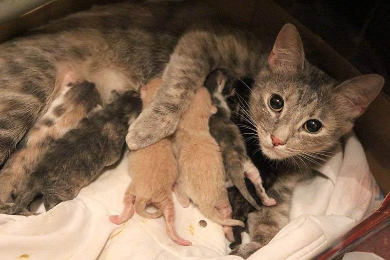 Как принять роды у кошки хозяину в домашних условиях