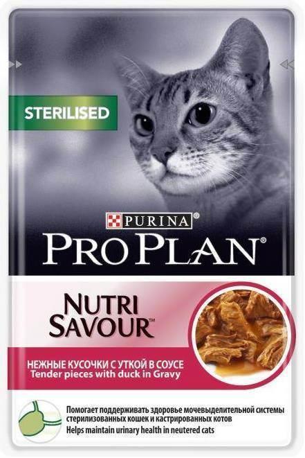 Мочекаменная болезнь у котов и кошек