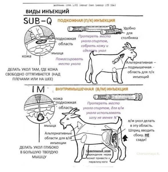 Глюкоза для кошек: инструкция по применению