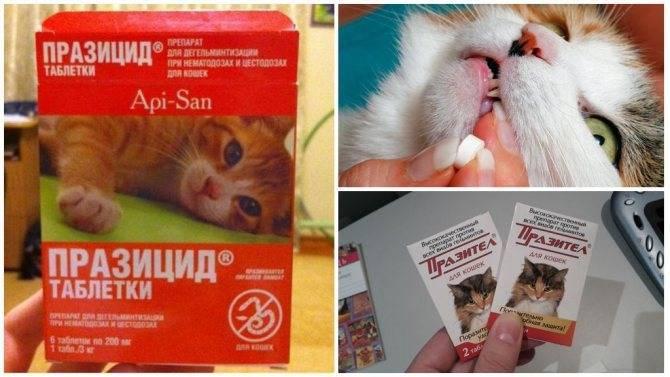 Празицид для кошек и котят: инструкция по применению, отзывы