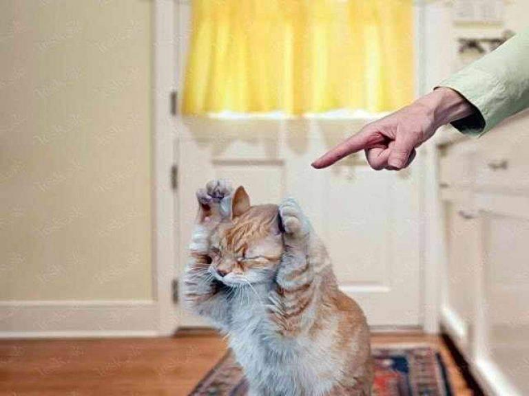 Котенок ночью не дает спать: что делать? котенок ночью не дает спать: что делать?