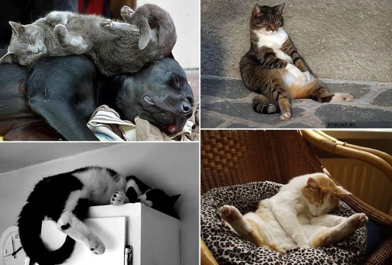 """Кот много спит: причины состояния, опасность и существующая норма   блог ветклиники """"беланта"""""""