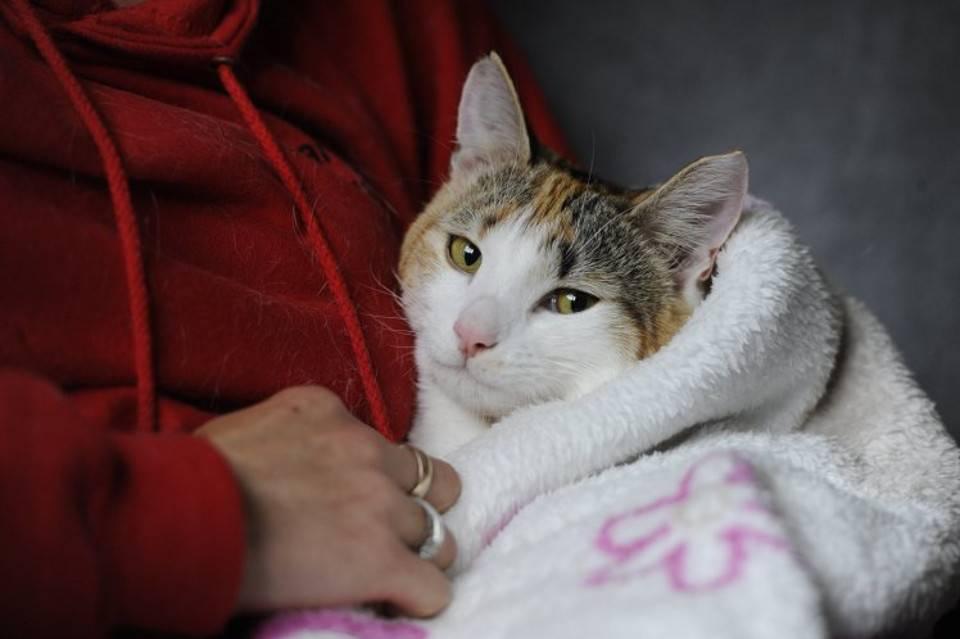Инсульт у кошки: первые признаки, лечение, последствия