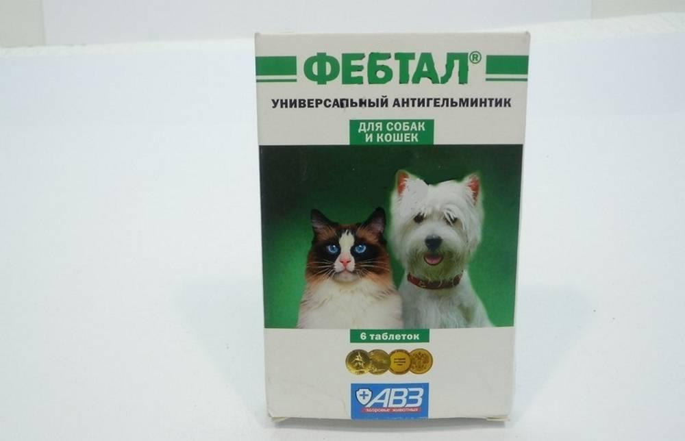 Фебтал инструкция по применению. препарат фебтал для кошек: особенности применения. противопоказания и меры предосторожности