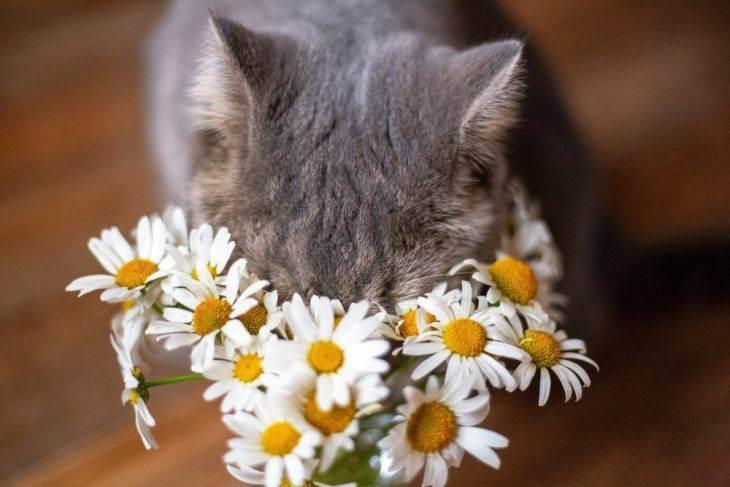 Симптомы и лечение бронхиальной астмы у кошек