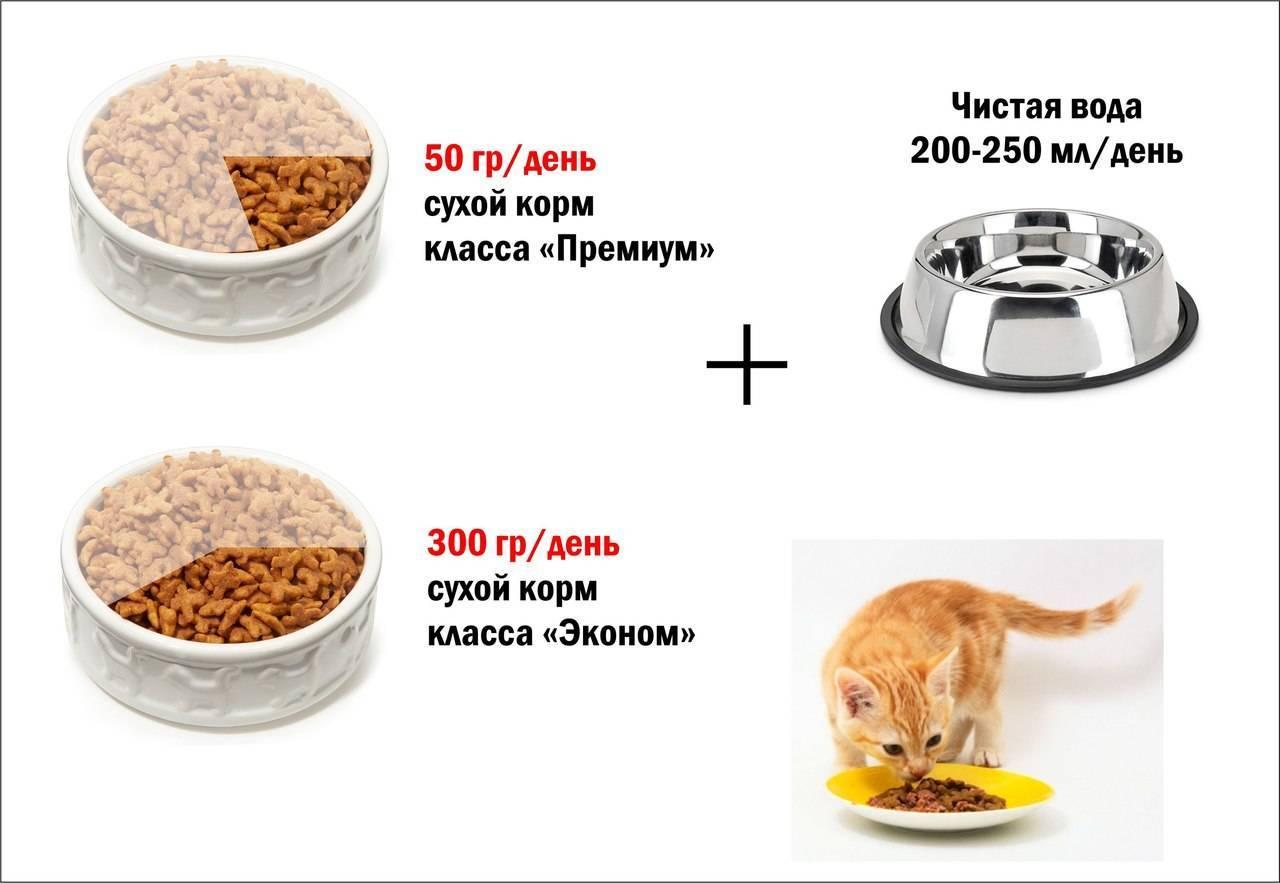 Особенности натурального питания для кошек
