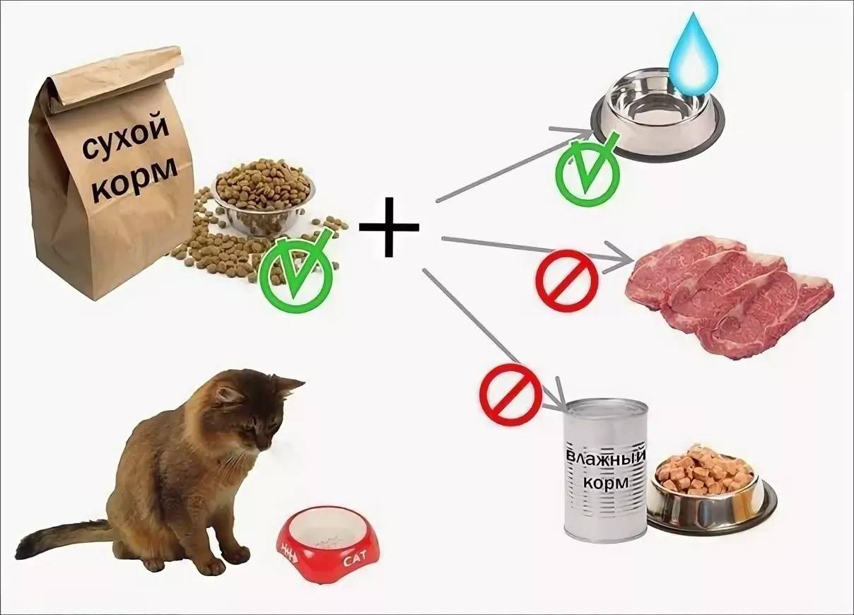 Правильное питание кошек — залог здоровья и долголетия пушистого питомца