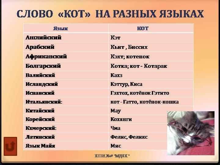 Экзотические имена для котов и кошек – 100 самых оригинальных кличек