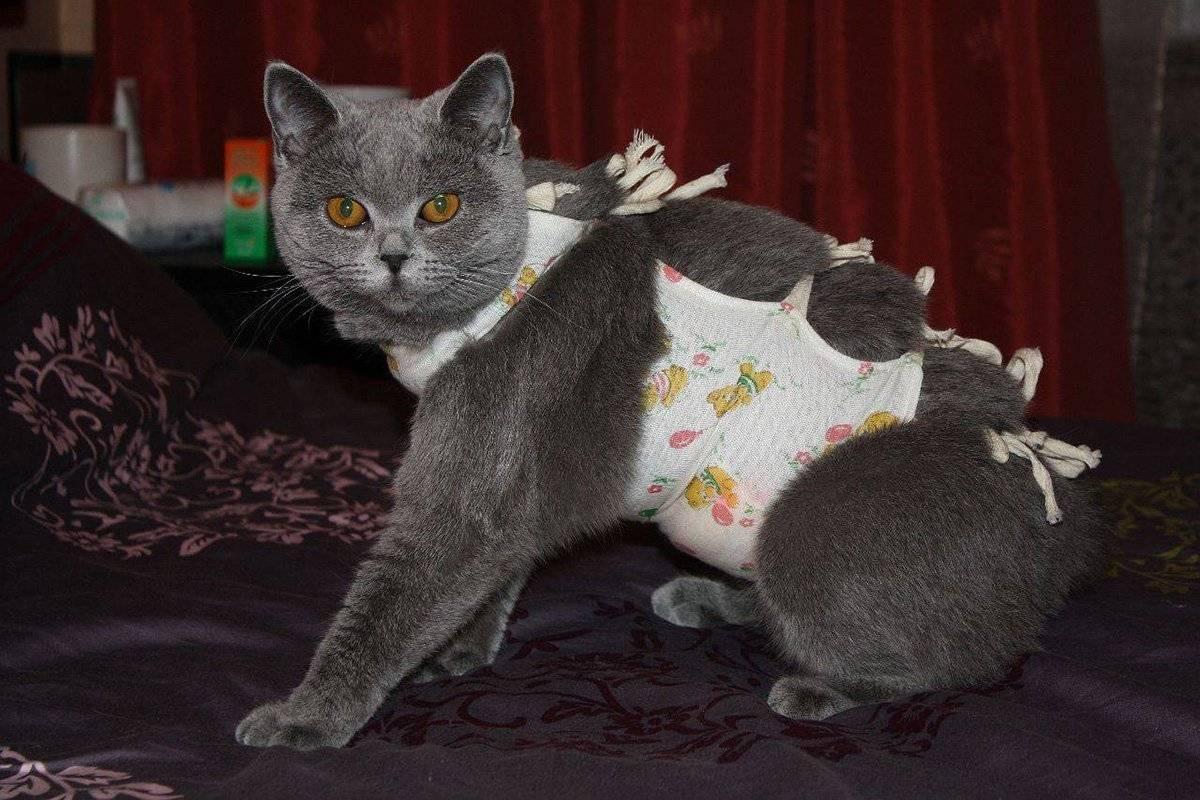 Стерилизация кошки: уход после операции от а до я