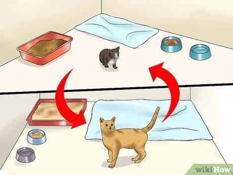 Адаптация кошки: как уменьшить стресс от переезда в новый дом