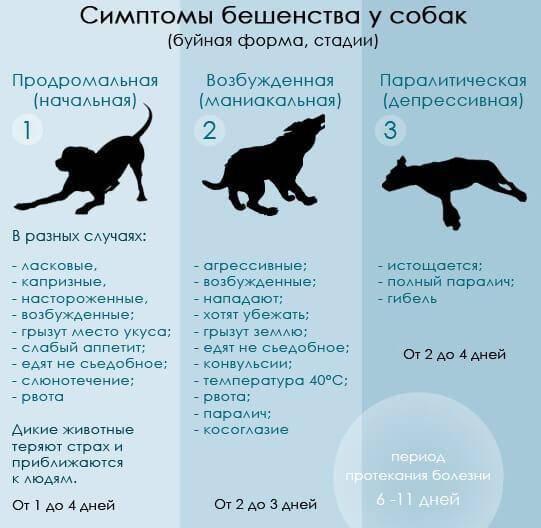 Признаки бешенства у человека после укуса кошки – как и когда проявляются симптомы болезни у людей