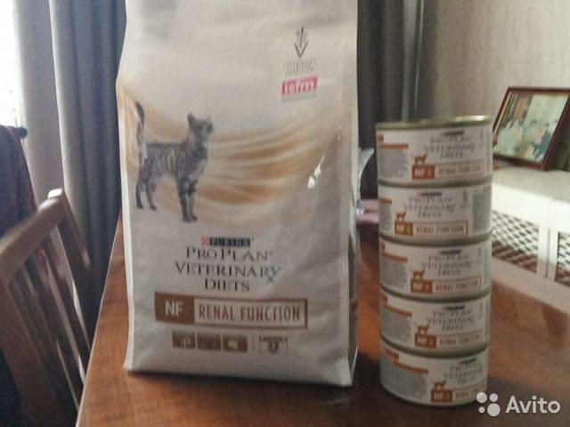 Чем кормить кошку с почечной недостаточностью: подбираем правильный рацион