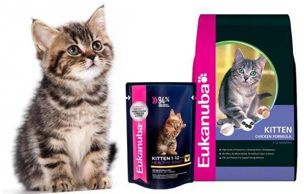 Корм эукануба – что вы насыпаете в миску своей кошке?
