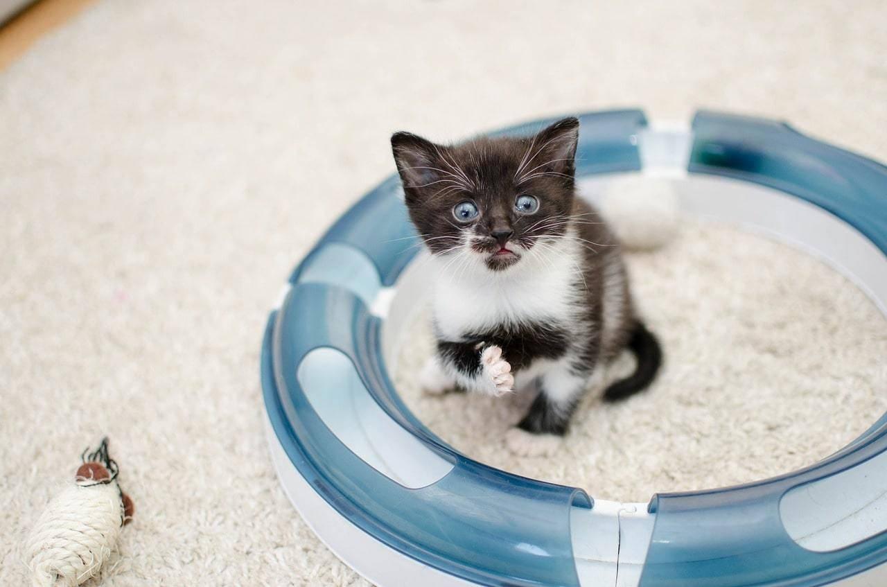Кошкин дом — все о кошках