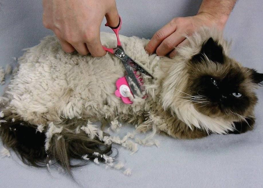 Причины появления колтунов у кошки, правила удаления, профилактика образования