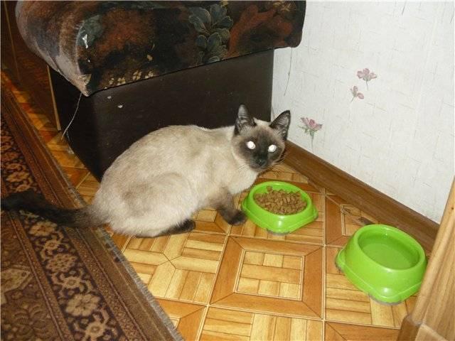 Чем кормить тайскую кошку