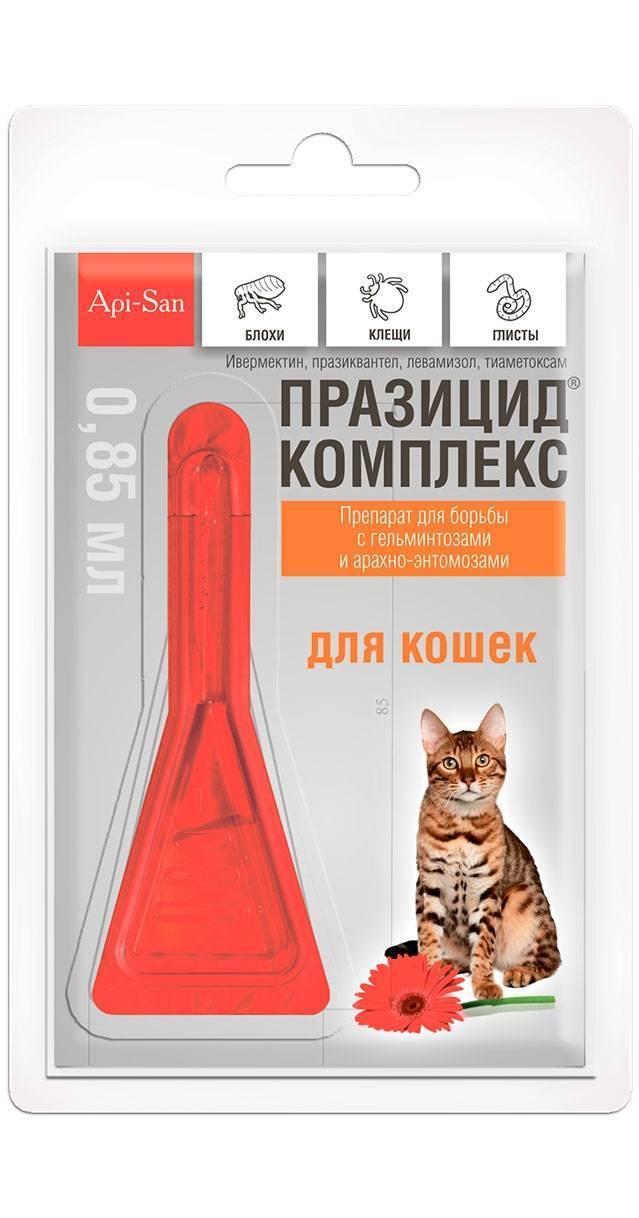 3 лучших средства от клещей и блох для кошек