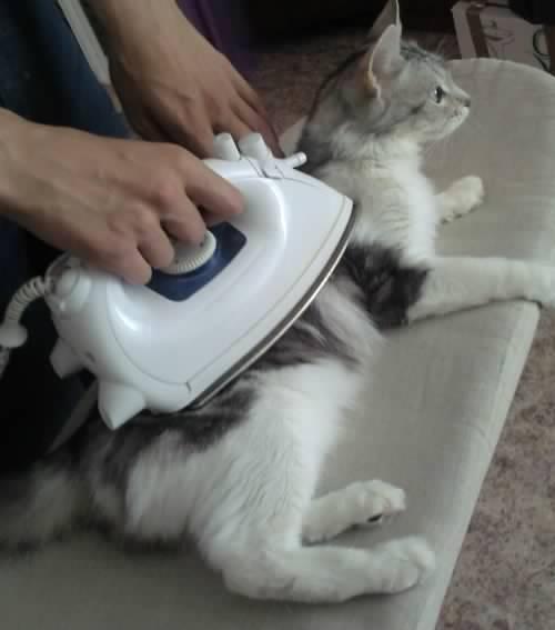 Почему кошка кусается когда её гладишь: основные причины
