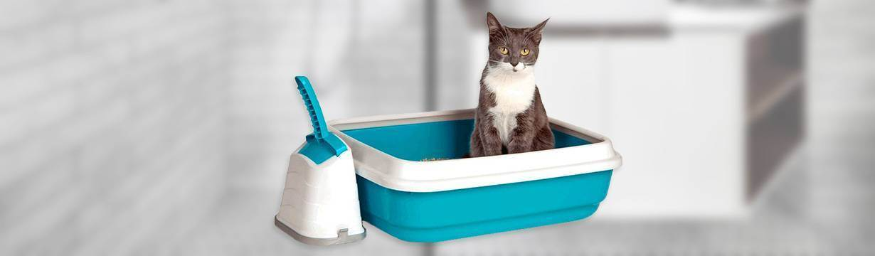 Выбираем наполнитель для кошачьего туалета | мои домашние питомцы
