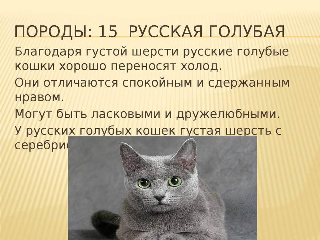 При какой температуре кошки могут выжить на улице, мерзнут ли они зимой?