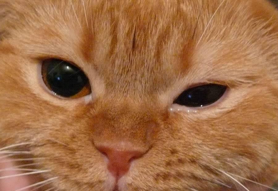 У котенка текут глазки