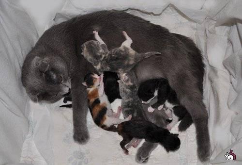 До какого возраста рожают кошки?