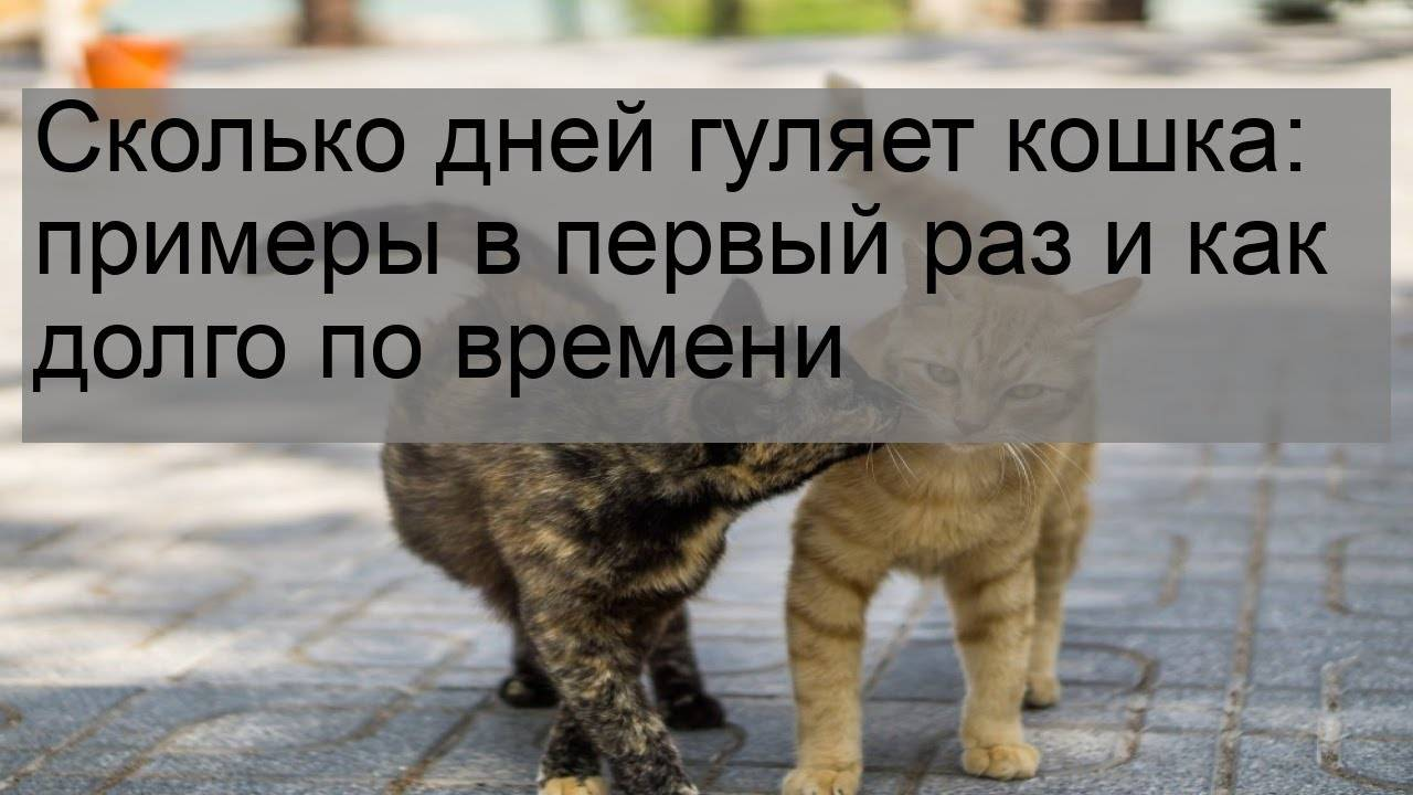 Кошка гуляет — как успокоить в домашних условиях