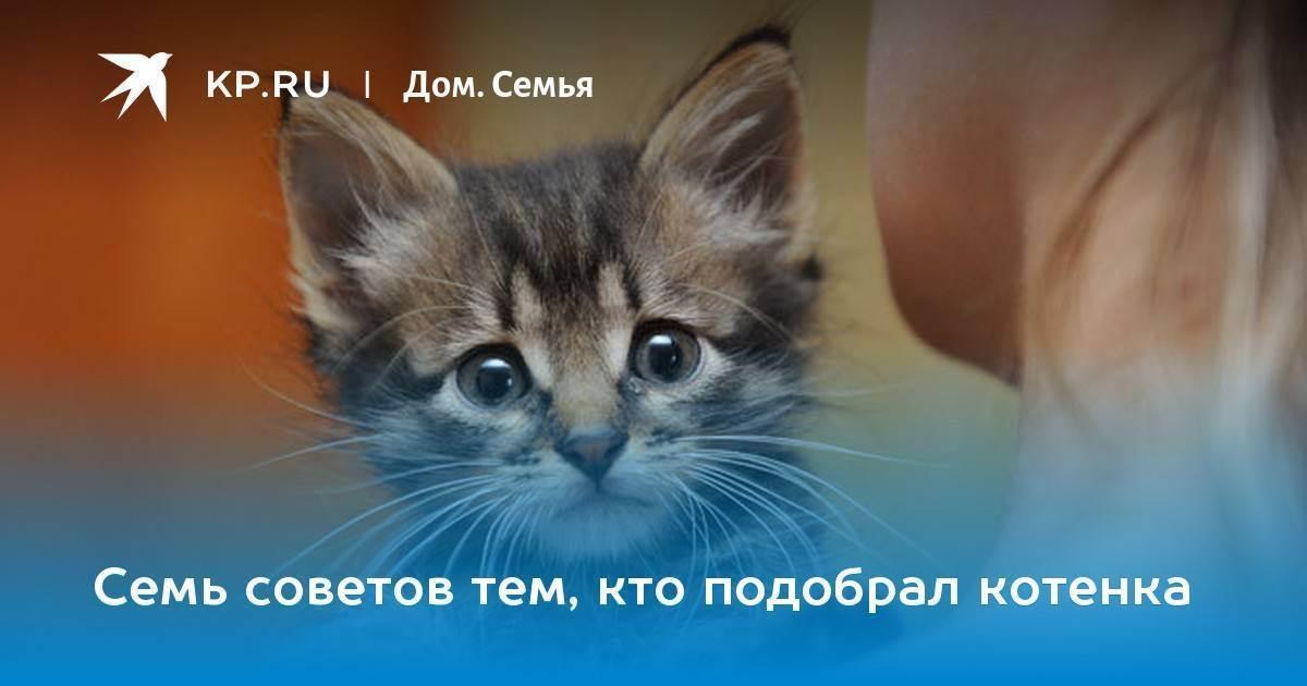 Адаптация котенка в новом доме - полезные рекомендации
