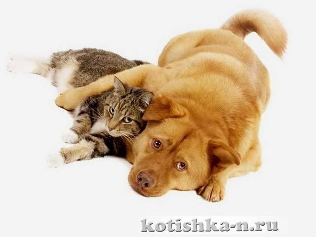 Как подружить кошку и собаку: советы, рекомендации