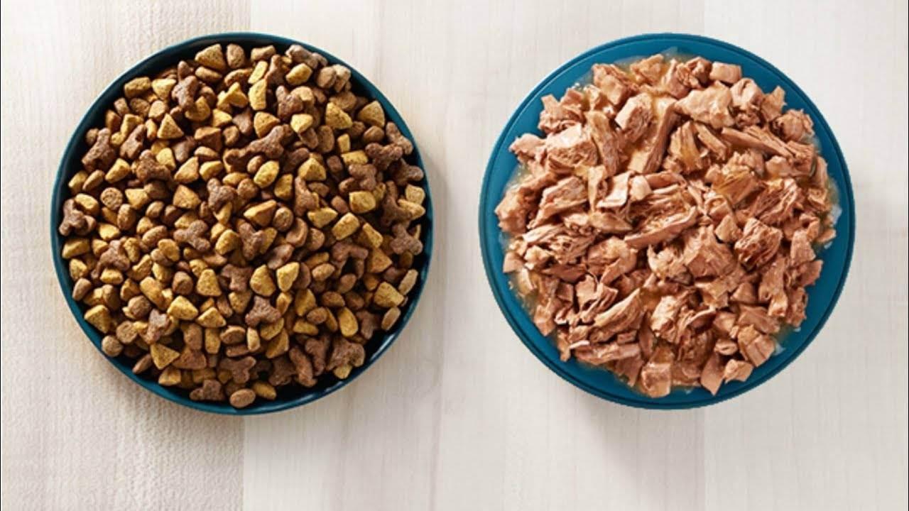 ᐉ можно ли давать кошке человеческие рыбные консервы? что будет с питомцем, если кормить его рыбными консервами? - zoomozaika.ru