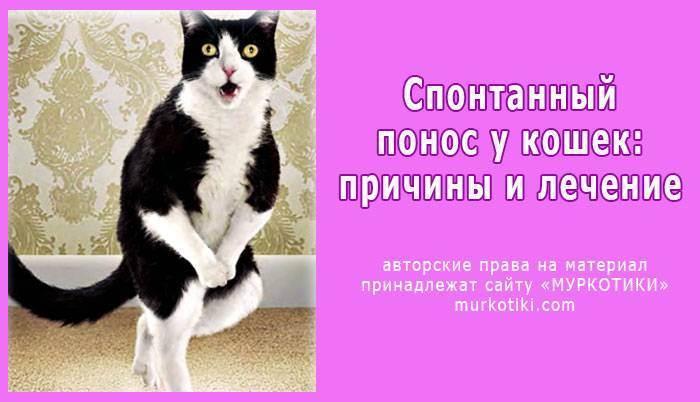 Гиповитаминоз у кошек - в чем опасность и методы лечения