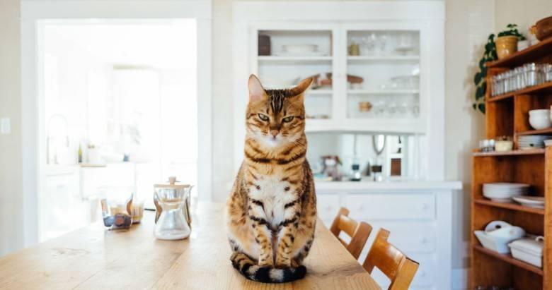 Можно ли есть кошек