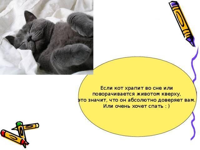 Почему кот храпит во сне и сопит, нормально ли это: причины кошачьего храпа