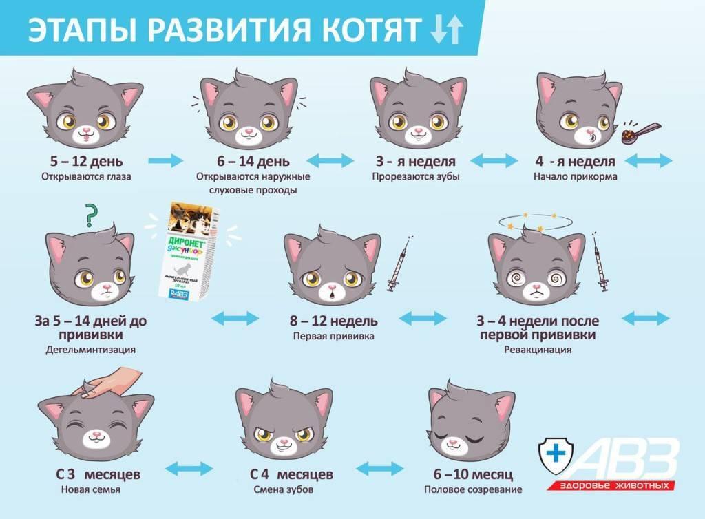 Как определить возраст котенка | сколько месяцев
