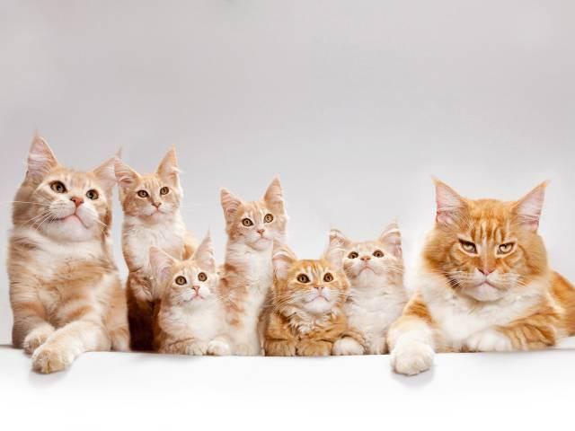 Что делать, если кошка не кормит новорожденных котят