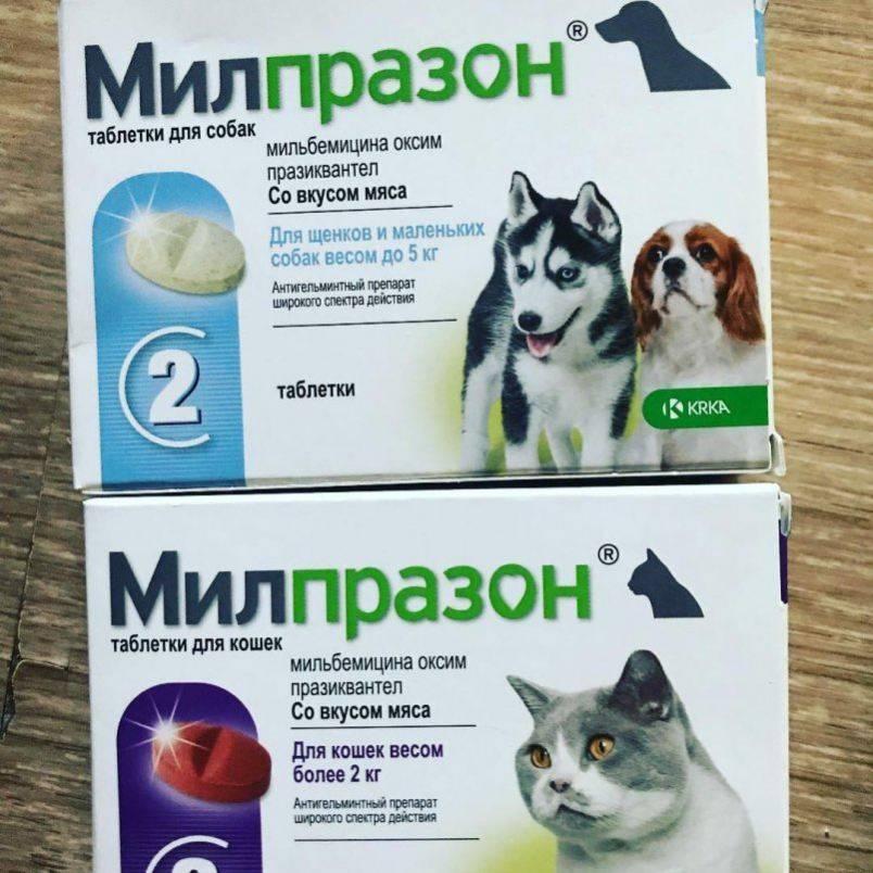 Милпразон для кошек: состав, инструкция по применению у взрослых питомцев и котят, противопоказания