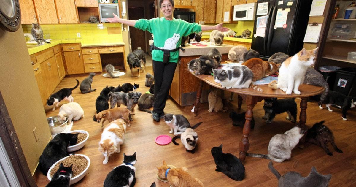 Почему стоит заводить кошку: 10 веских причин | на всякий случай