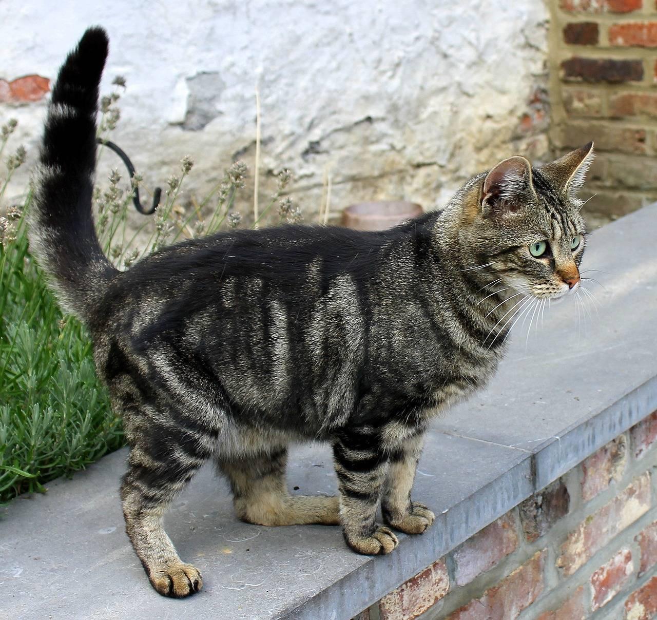 Окрасы кошек с фотографиями и названиями: какого цвета бывают коты и как они называются?