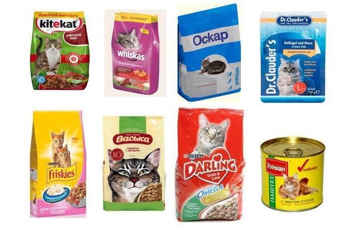 Можно ли кормить котёнка только влажным кормом: плюсы и минусы можно ли кормить котёнка только влажным кормом: плюсы и минусы