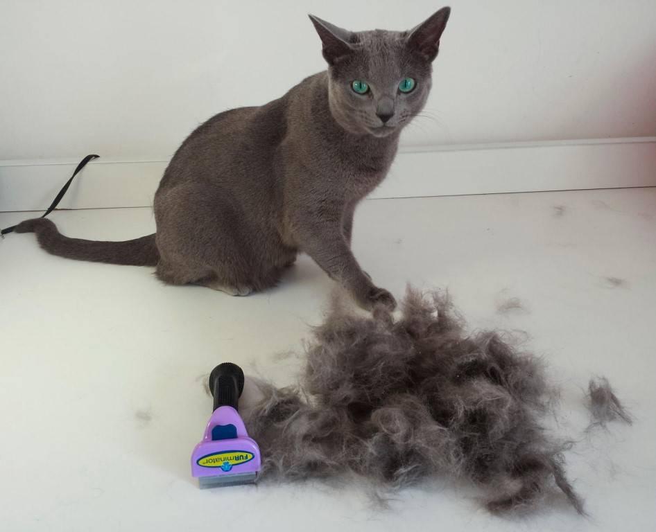 Зачем нужен фурминатор для кошек — 4 лапки