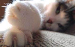 Удаление когтей: последствия операции для котов и кошек