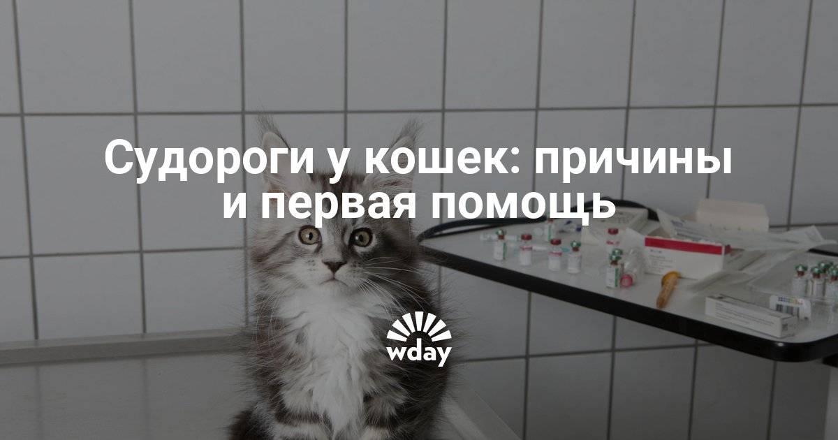 Симптомы и судорог у кошки