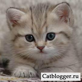 Все, что нужно знать об аллергии на кошку. про болезни