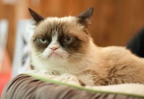 Почему кошка рычит на своих котят. почему кошки шипят