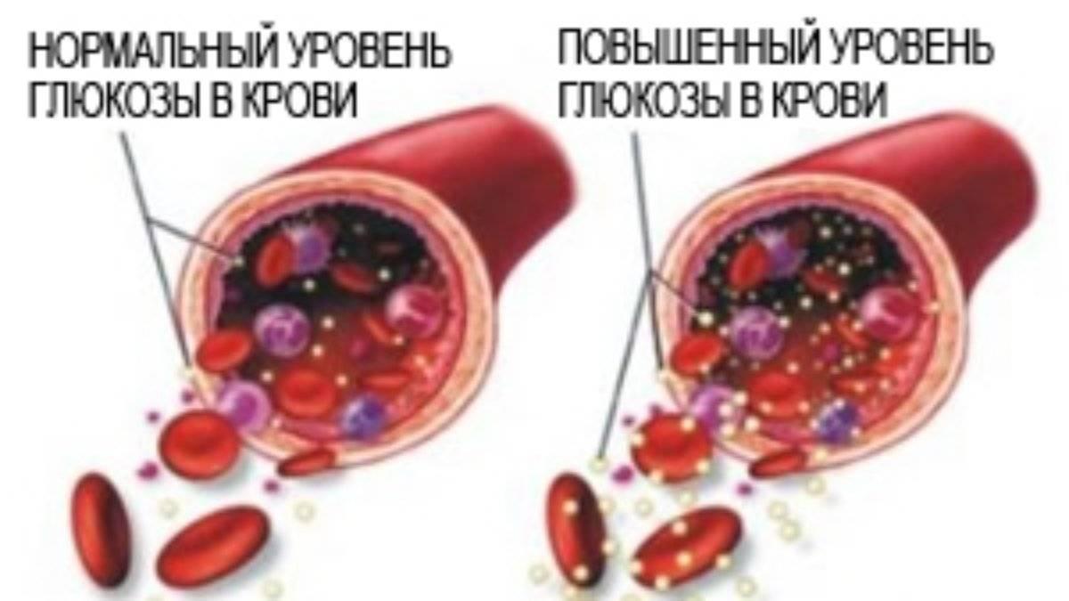 Повышенный сахар в крови у кота
