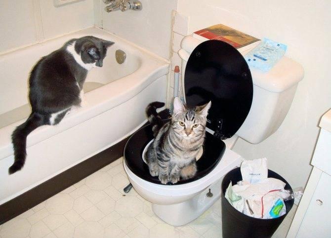Как приучить кошку к унитазу? | животный мир